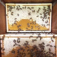 Imkerei Bienentanz Honig