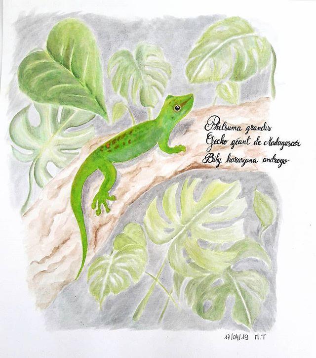 Gecko de Madagascar sur sa branche