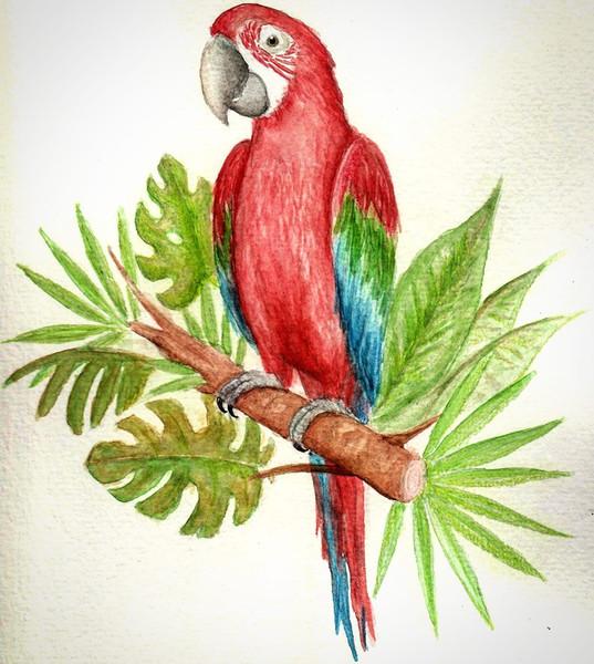 Mr Parrot