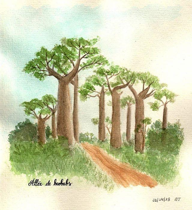 Allée de baobabs