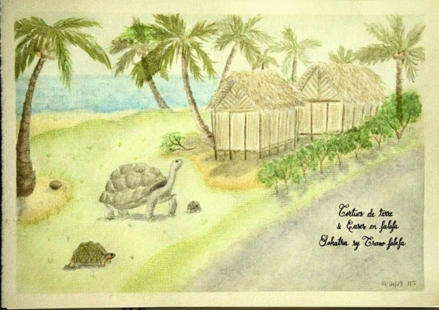 Tortues de terre et Cases en falafa