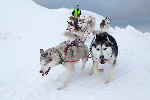 Barentsburg Husky Center Dog Sledding