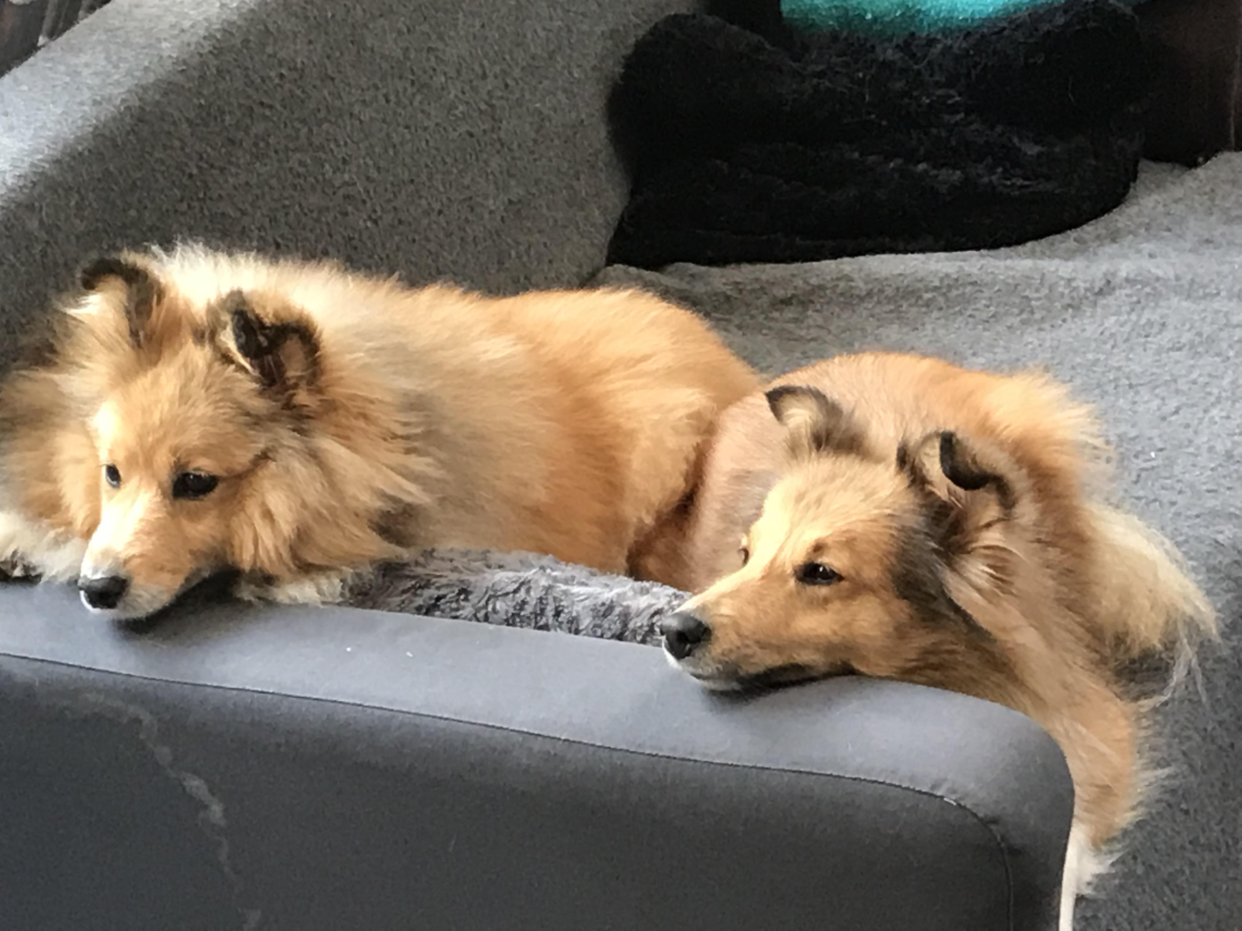 Luna en Daja