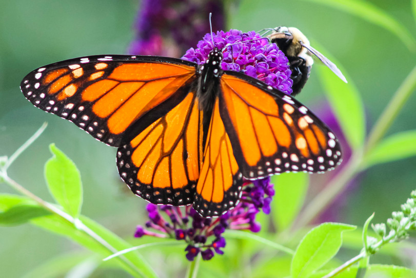Butterfly0109.jpg
