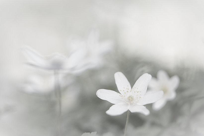bigstock-Spring-wild-flower-background--