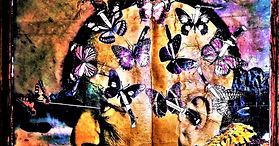 Gary Studley  Butterfly Collector image.