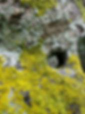 Rocher au Village de Kerneac'h