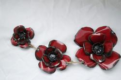 poppybloom