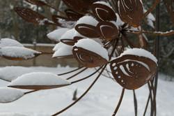 progression in winter close up