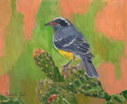 Bird on a Cacus