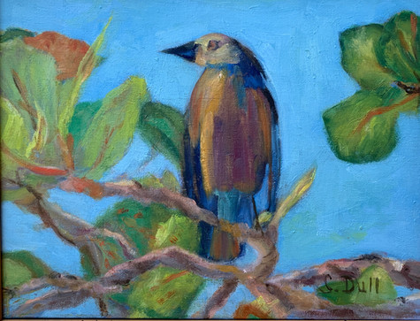 Caribbean Bird