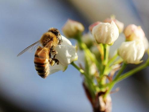 1 000 abeilles parrainées pour 1 pot personnalisé (250g)