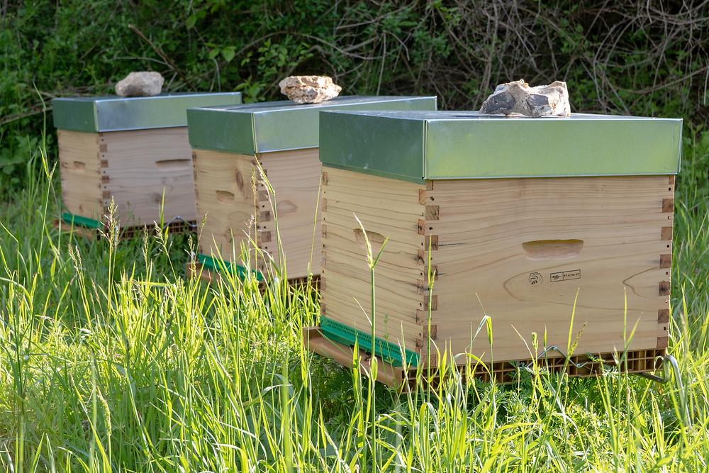 apimelis miel abeille ruche apiculture yvelines essonne versailles