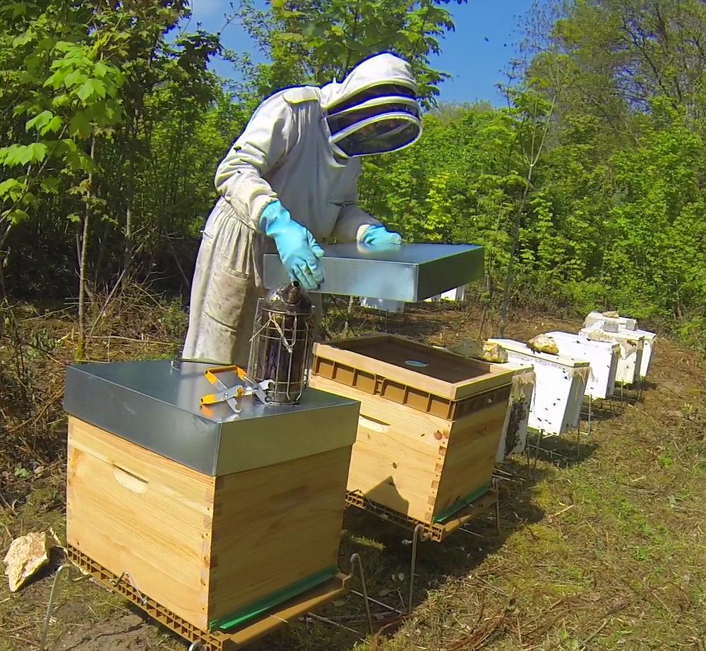 apimelis miel abeille ruche apiculture apiculteur