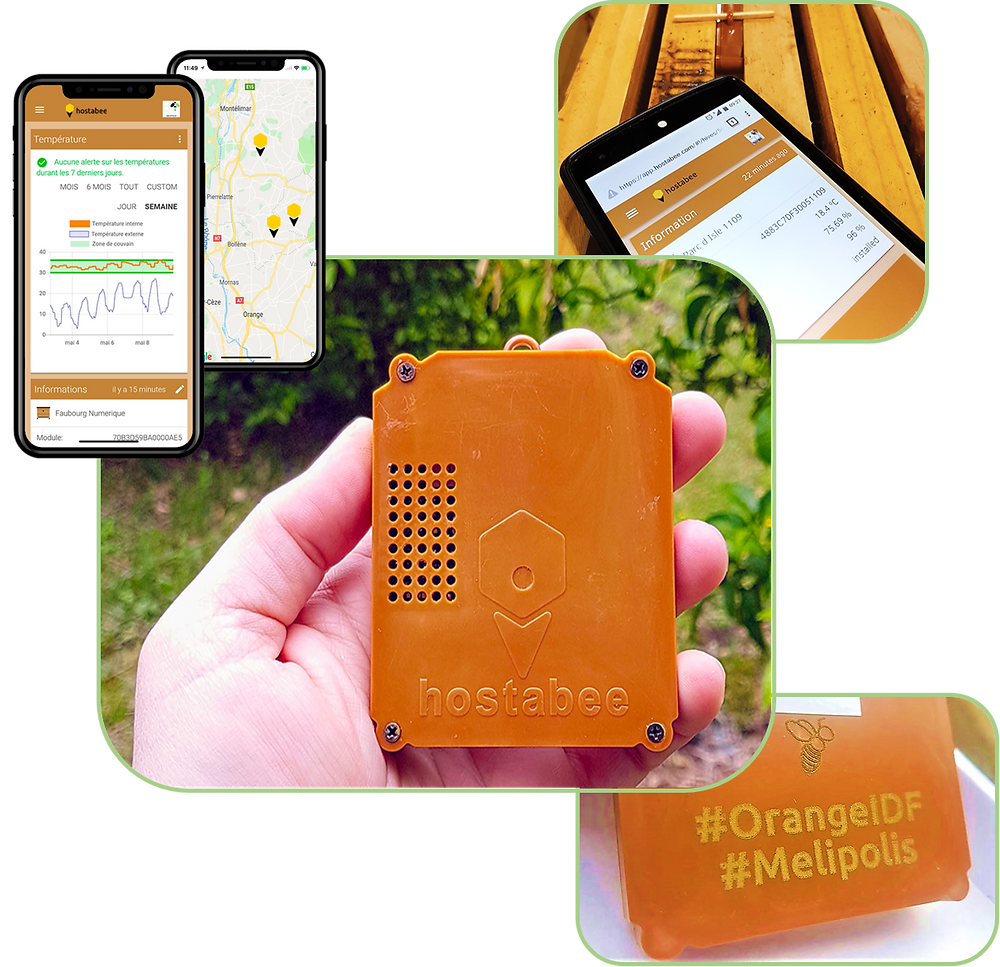 apimelis miel abeille ruche apiculture connectée digital innovation