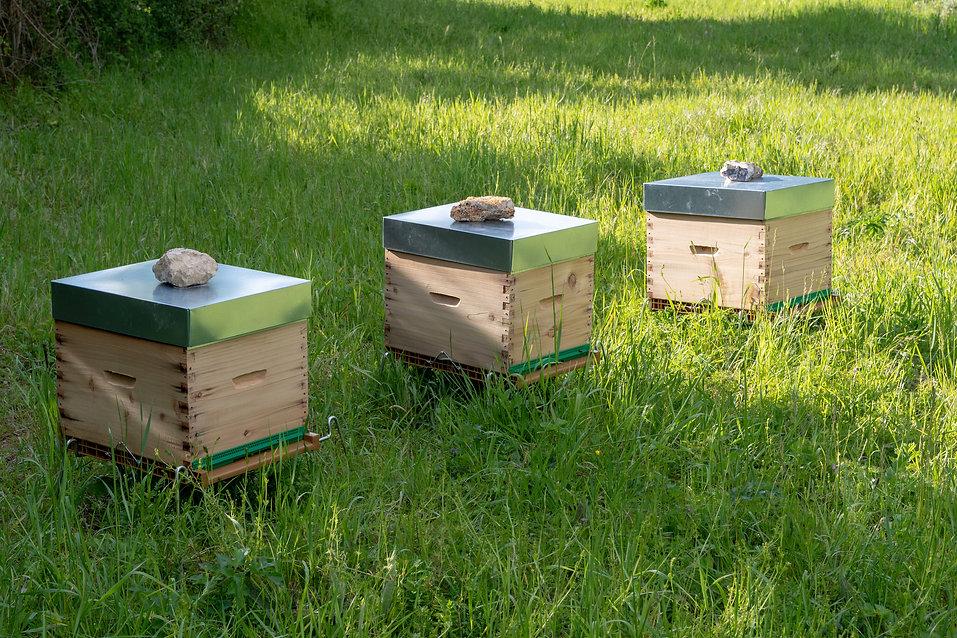 ruches rucher yvelines versailles chavenay