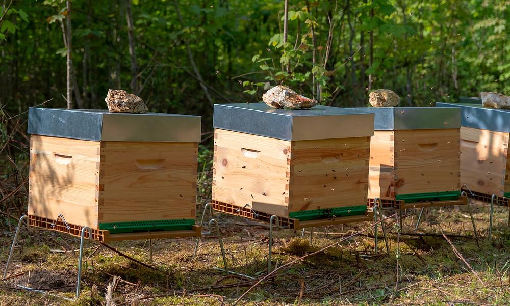 apimelis miel abeille ruche apiculture yvelines essonne île-de-france