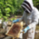 apiculteur.jpg