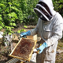 équipe apimelis apiculteur