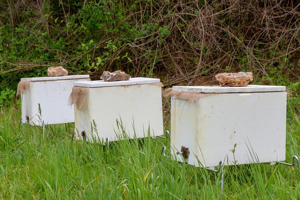 apimelis miel abeille ruche apiculture ruchette