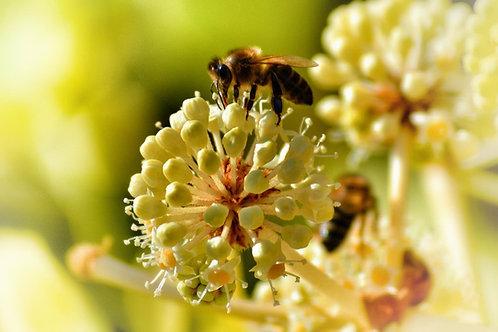 2 000 abeilles parrainées pour 2 pots personnalisés (500g)