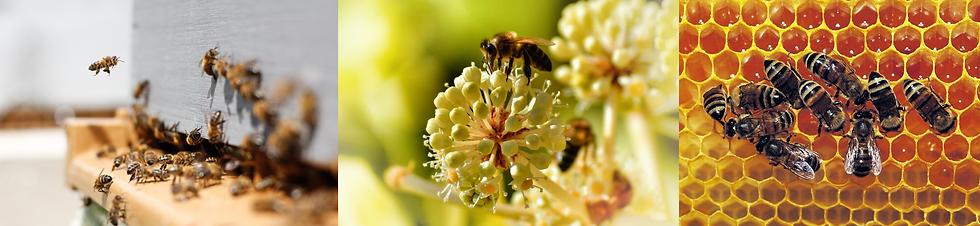 Abeilles, ruches, fleurs et miel