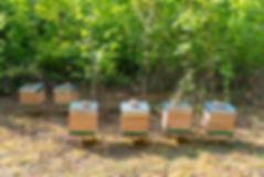ruches rucher yvelines essonne ile-de-france