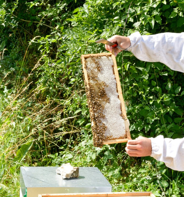 miel abeille ruche apiculture