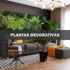 PLANTAS-DECORATIVAS.jpg