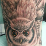 Owl in defense posture
