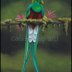 bird, exotic, guatamala, native, tropical, acrylic, painting,