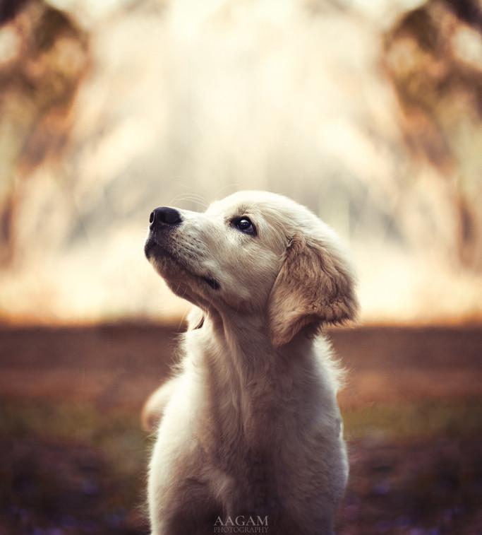 Caper the Pup