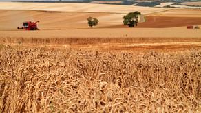 Covid-19 et sécurité alimentaire en Belgique
