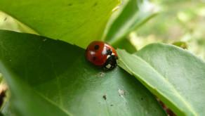 270 scientifiques belges appellent notre gouvernement à sauvegarder la biodiversité