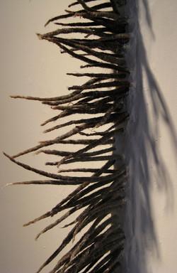 Subcutanea | Grass