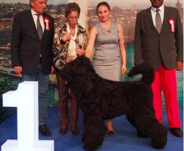 Internationale Hundeausstellung in Genf / Exposition canine internationale à Genève