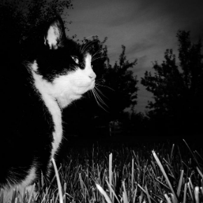 Northlands Veterinary Hospital has some dark night safety advice for cat owners.