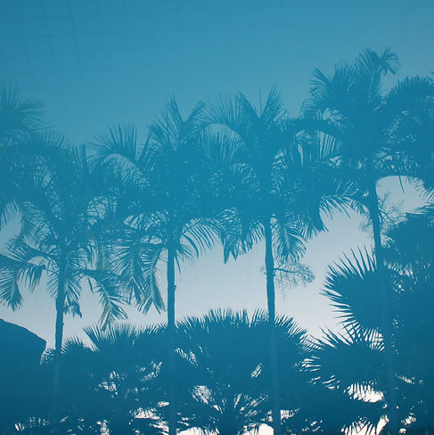 Palm Trees with blue filter background image