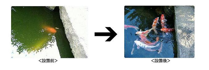 池の水の洗浄.jpg