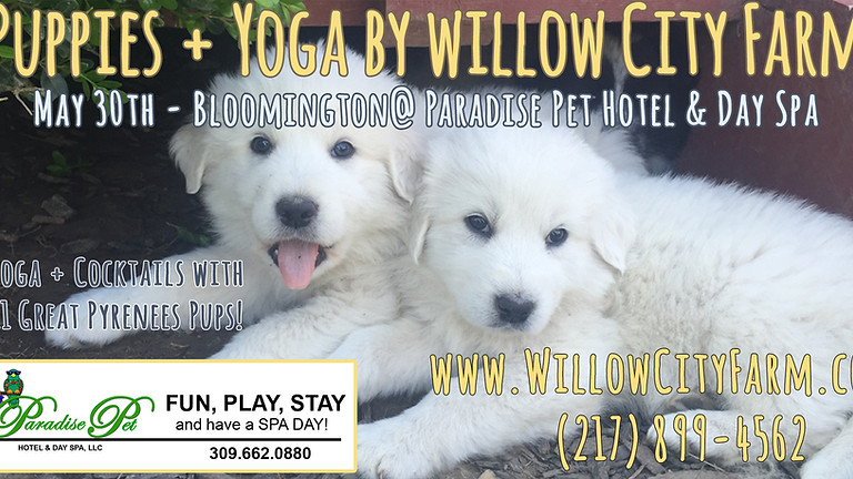 Puppies + Yoga by Willow City Farm (Bloomington)