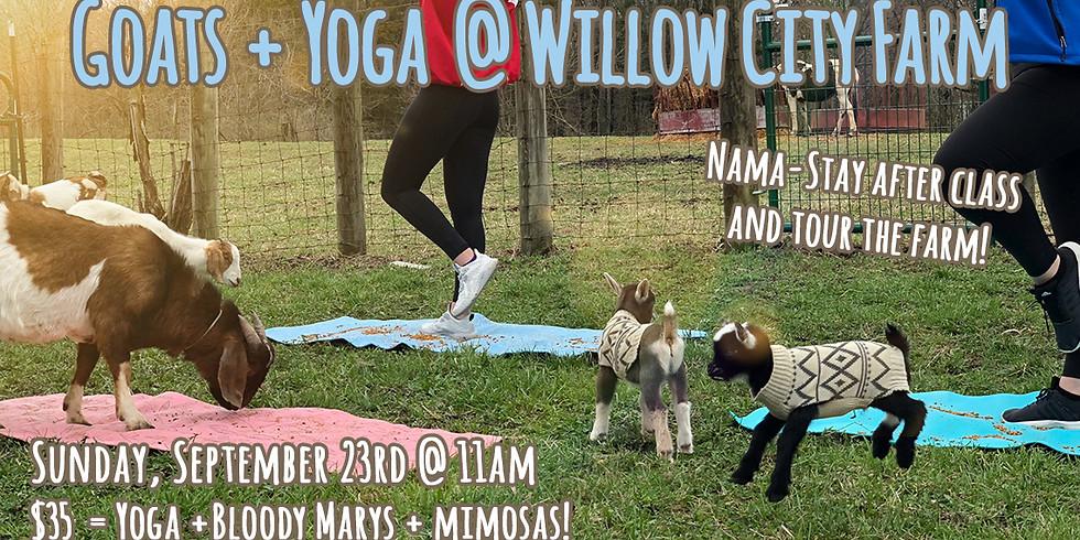 Goats + Yoga @ Willow City Farm (1)