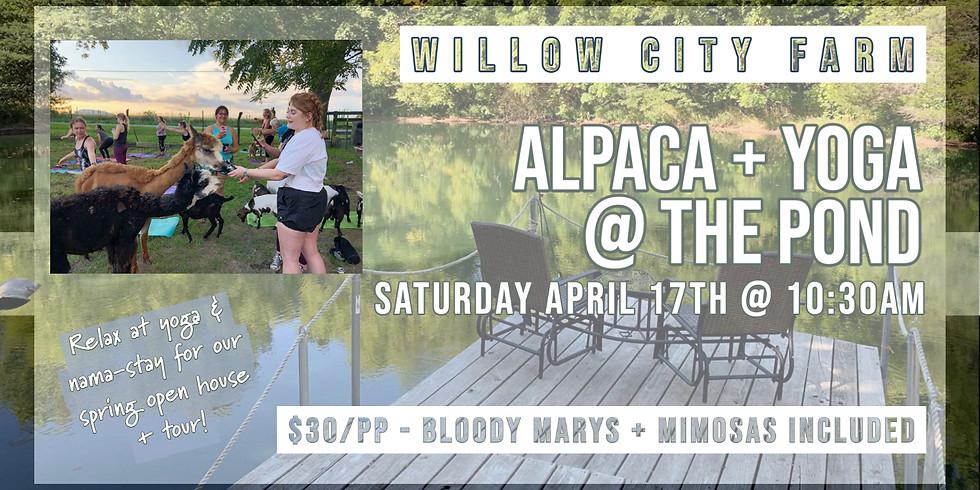 Alpacas + Yoga @ The Pond, Willow City Farm