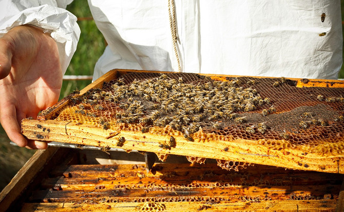 Honey Demo + Shearing Day + WCF Cooked + Chicks + LLCC Earth Day