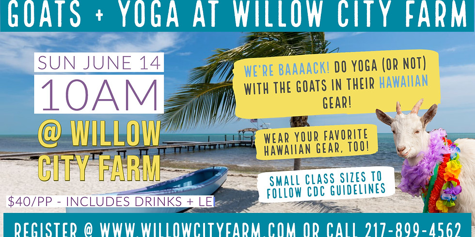 Goats + Yoga @ Willow City Farm (Small Class Sizes)