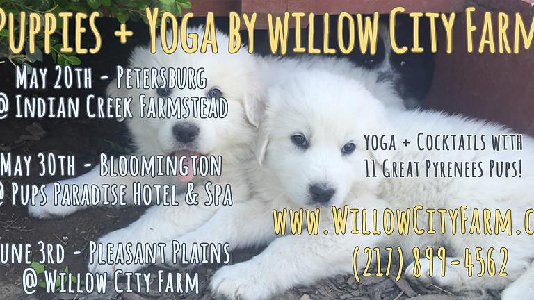 Puppies + Yoga @ Willow City Farm (Springfield)