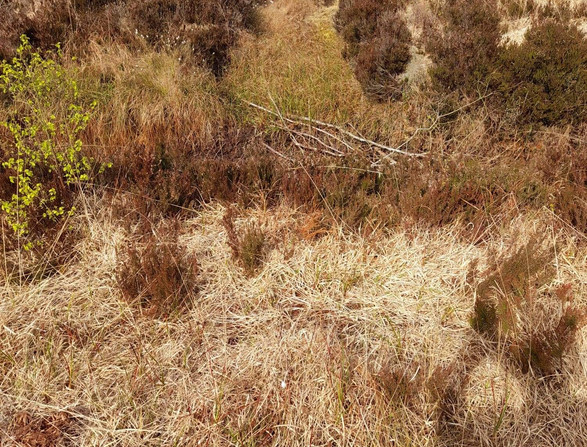 The most beautiful peatland Rosalind fell in love with
