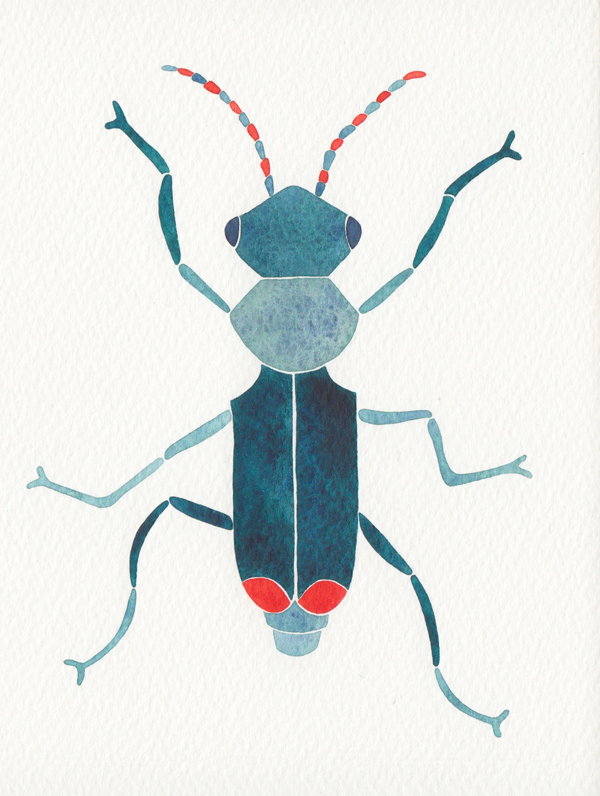 blue coleoptera