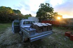 nestbox conservation citizen fauna