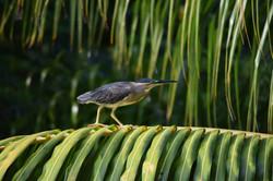 flora, fauna, surveys, protection
