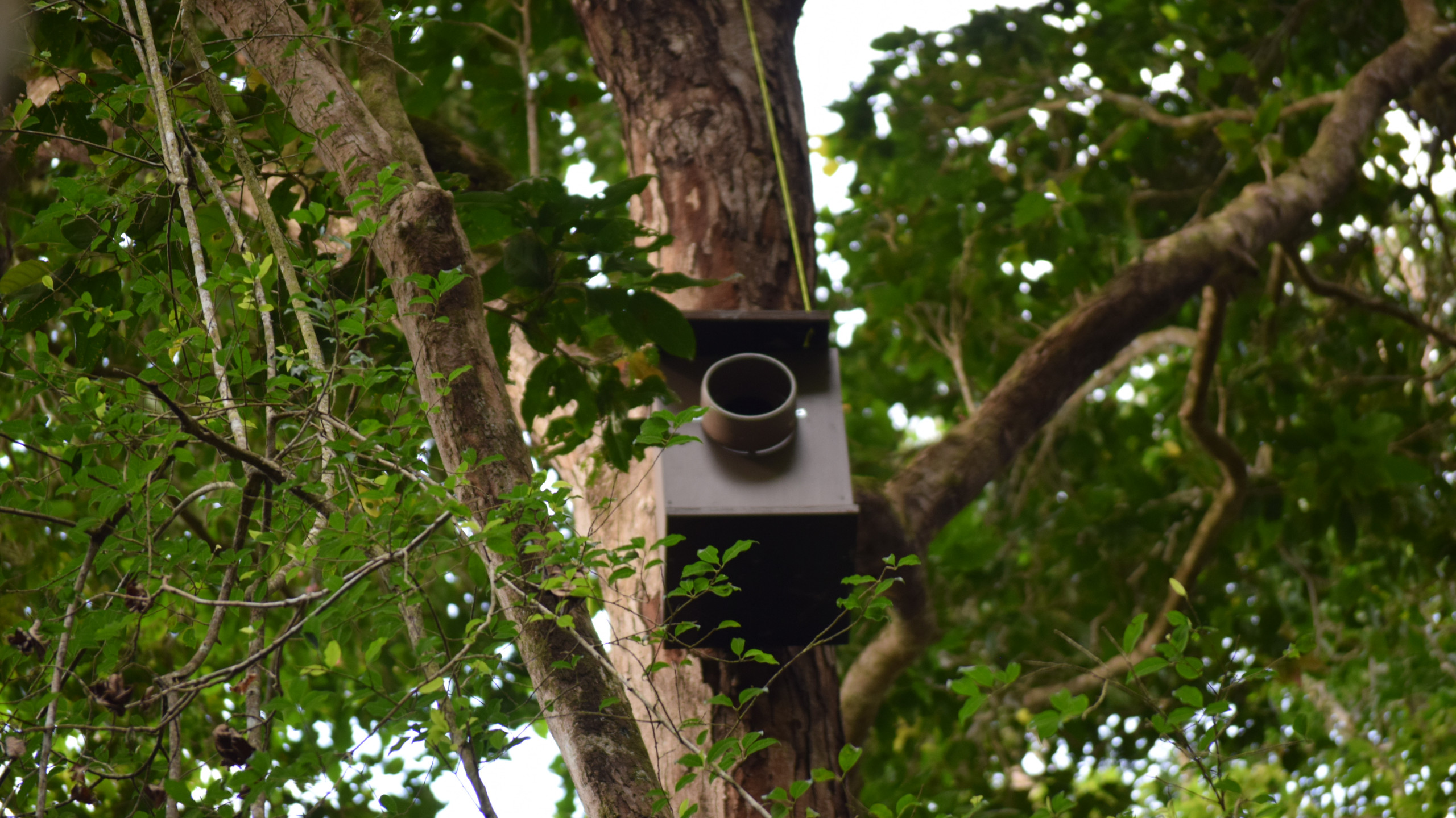 Installed nest box